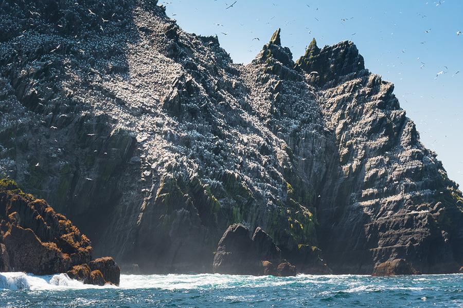 Gannet colony on Little Skellig