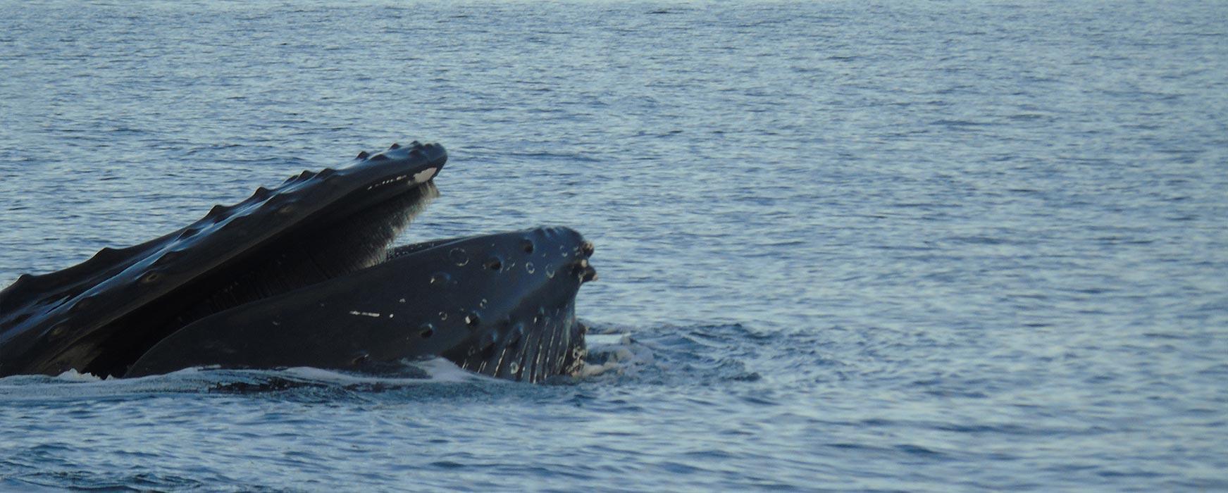 Whale watching Derrynane